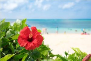 沖縄の海の風景写真